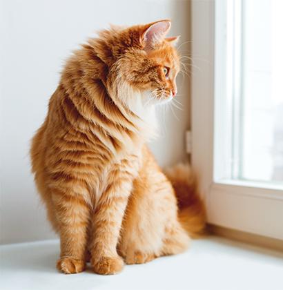 Chat dans une maison protégé par un détecteur visio image